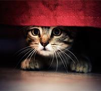 Запах кошачьей мочи в квартире