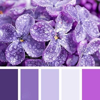 Гамма фиолетового цвета