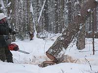 Заготовка древесины_1