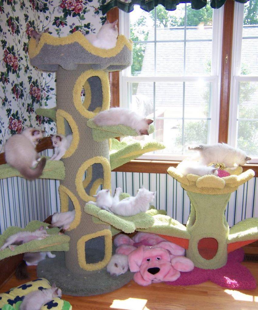 Дом для кошек.