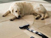 ru.depositphotos.com/ssuaphoto: Собака на ковре