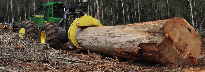 Заготовка леса для производства доски пола